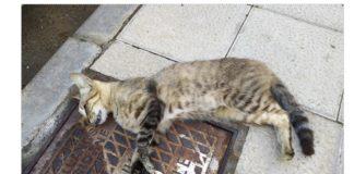 Uno de los gatos fallecidos hallados en Los Llanos de Aridane
